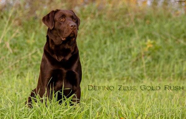 Defino Zeus Gold Rush