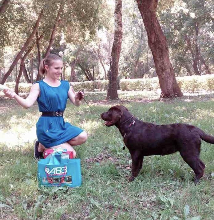 Defino, dog show, выставка собак, хендлинг, подготовка к выставке