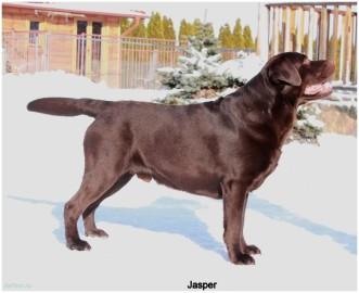 jasper2012_02